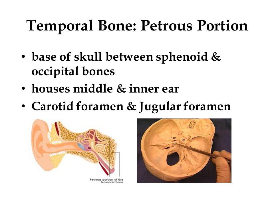 Temporal Bone: Petrous Portion