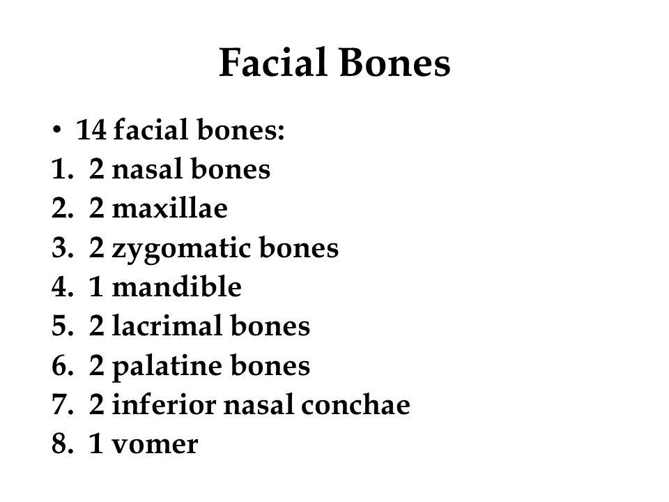 Facial Bones 14 facial bones: 2 nasal bones 2 maxillae