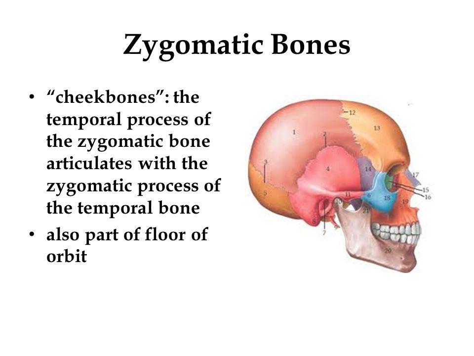 Zygomatic Bones cheekbones : the temporal process of the zygomatic bone articulates with the zygomatic process of the temporal bone.