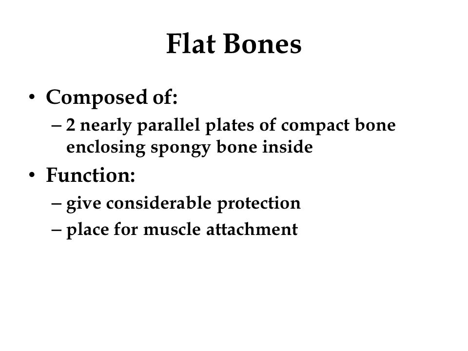 Flat Bones Composed of: Function: