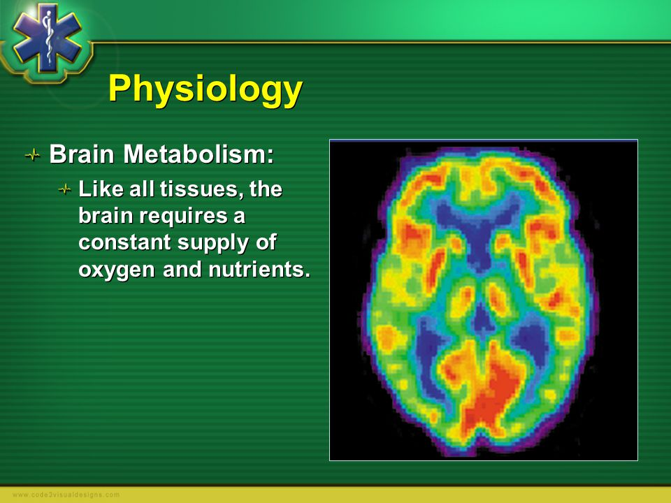 Physiology Brain Metabolism: