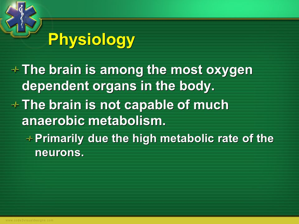 Physiology The brain is among the most oxygen dependent organs in the body. The brain is not capable of much anaerobic metabolism.