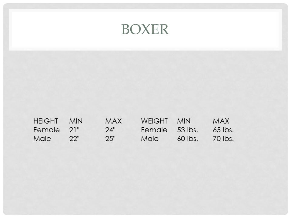 Boxer HEIGHT MIN MAX WEIGHT Female 21 24 53 lbs. 65 lbs. Male 22