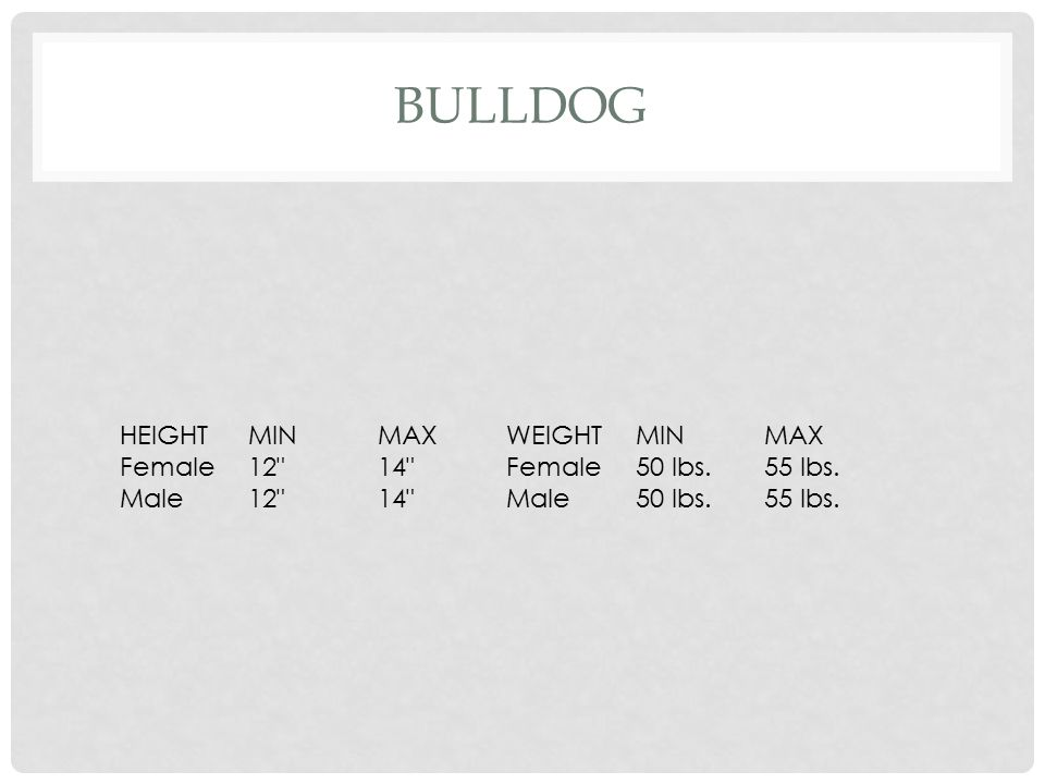 Bulldog HEIGHT MIN MAX WEIGHT Female 12 14 50 lbs. 55 lbs. Male