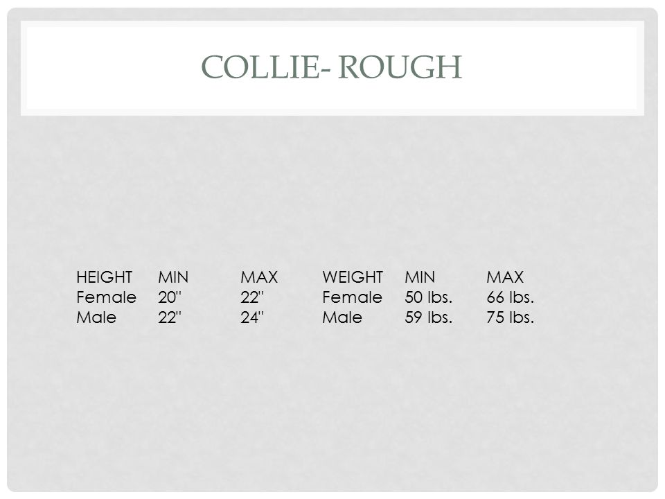 Collie- Rough HEIGHT MIN MAX WEIGHT Female 20 22 50 lbs. 66 lbs.