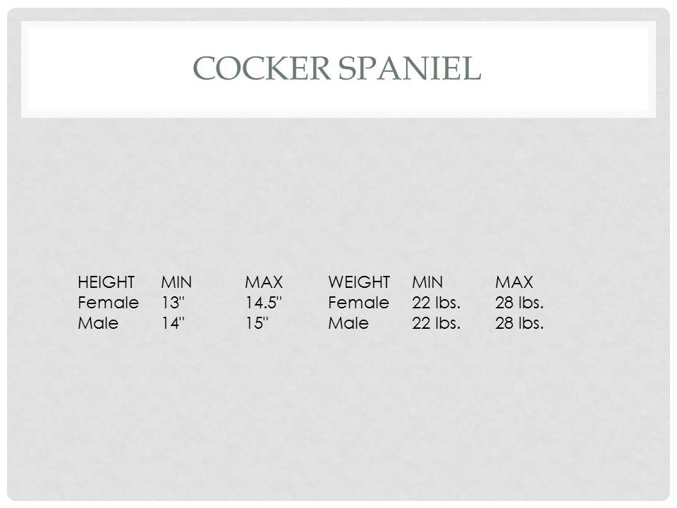 Cocker Spaniel HEIGHT MIN MAX WEIGHT Female 13 14.5 22 lbs. 28 lbs.