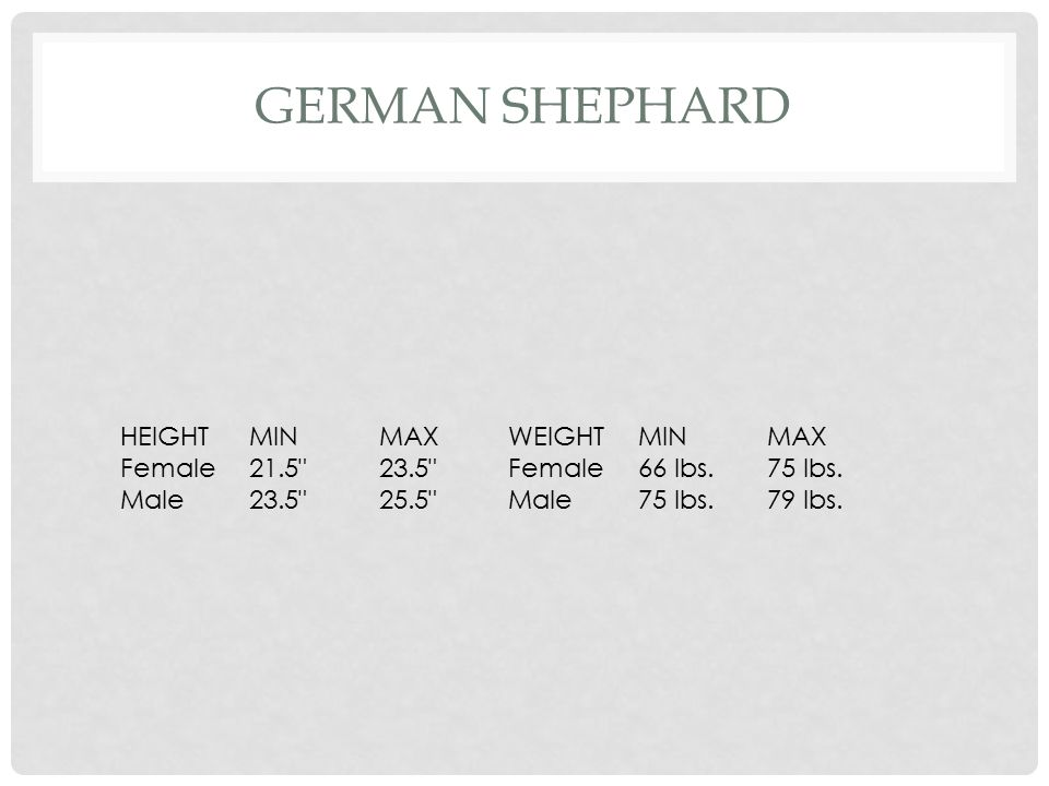 German Shephard HEIGHT MIN MAX WEIGHT Female 21.5 23.5 66 lbs.