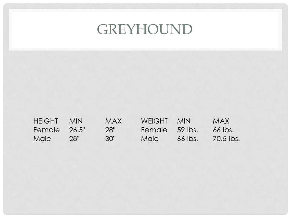 Greyhound HEIGHT MIN MAX WEIGHT Female 26.5 28 59 lbs. 66 lbs. Male