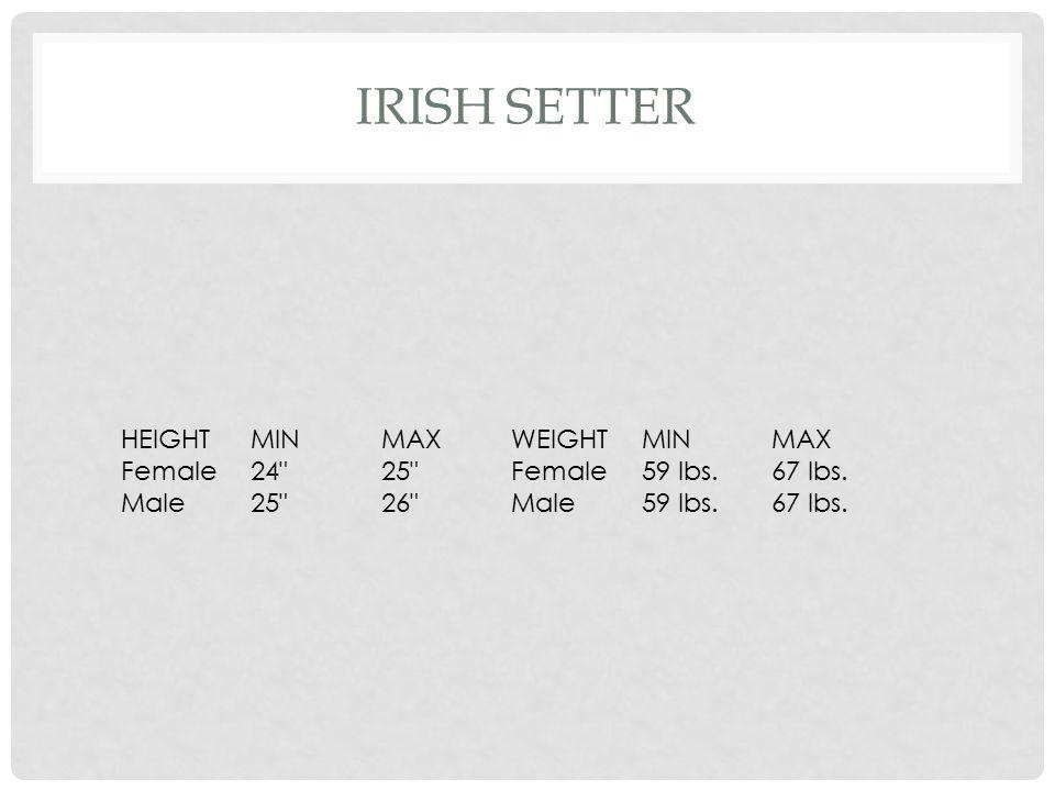 Irish Setter HEIGHT MIN MAX WEIGHT Female 24 25 59 lbs. 67 lbs. Male