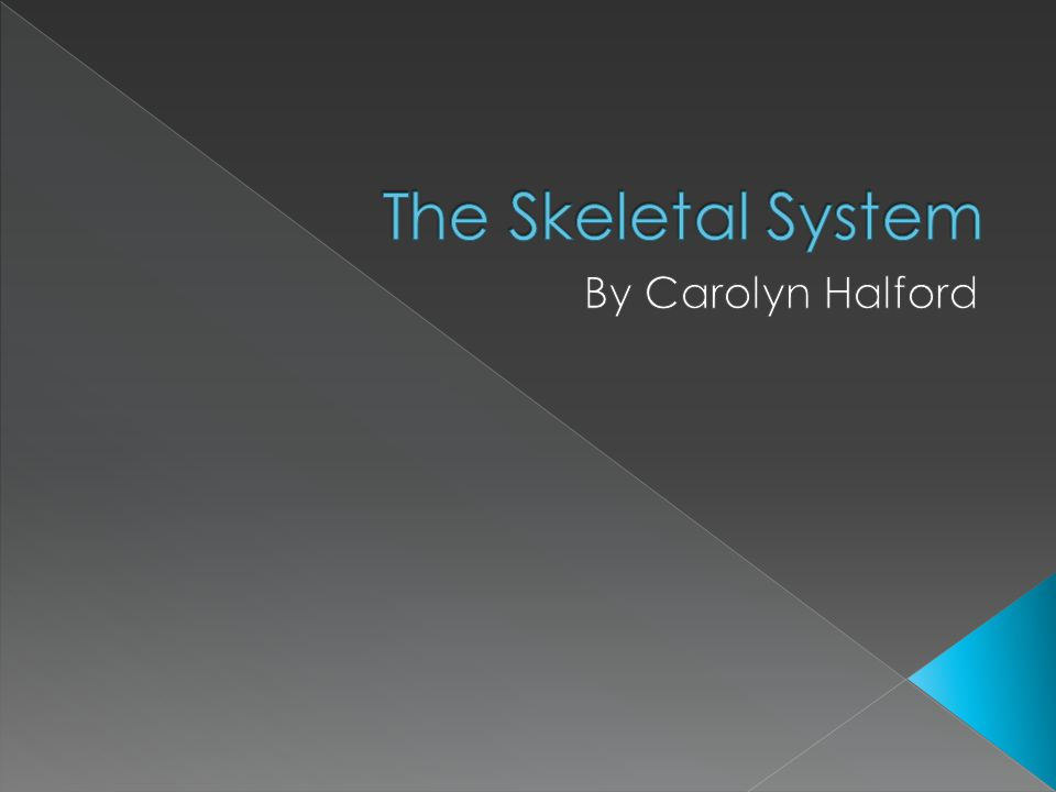 The Skeletal System By Carolyn Halford