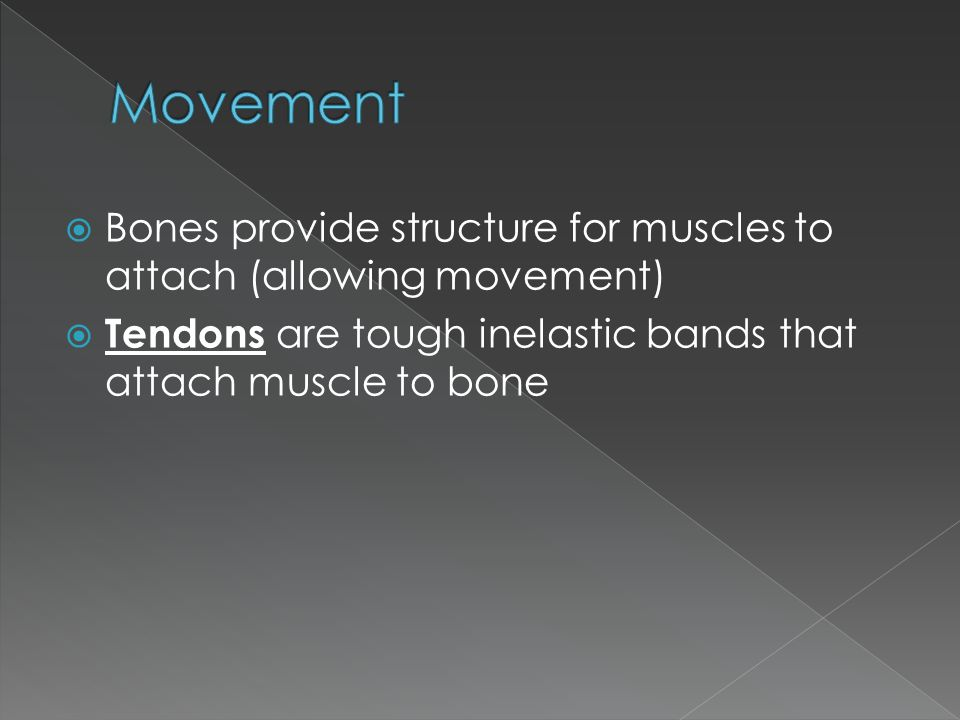 Movement Bones provide structure for muscles to attach (allowing movement) Tendons are tough inelastic bands that attach muscle to bone.