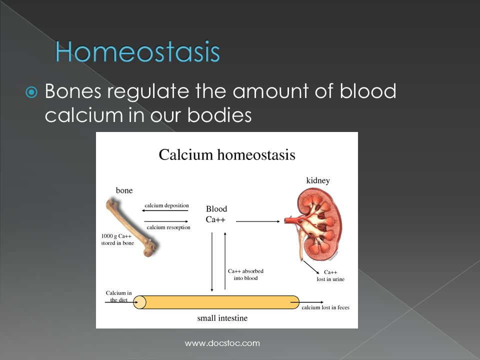 Homeostasis Bones regulate the amount of blood calcium in our bodies
