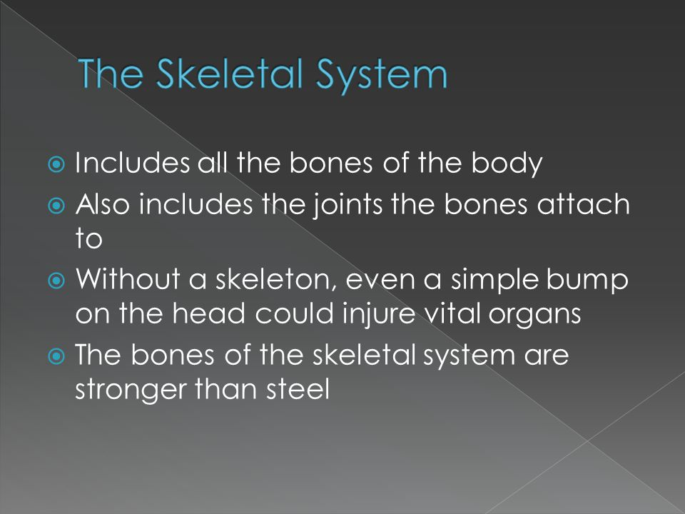 The Skeletal System Includes all the bones of the body