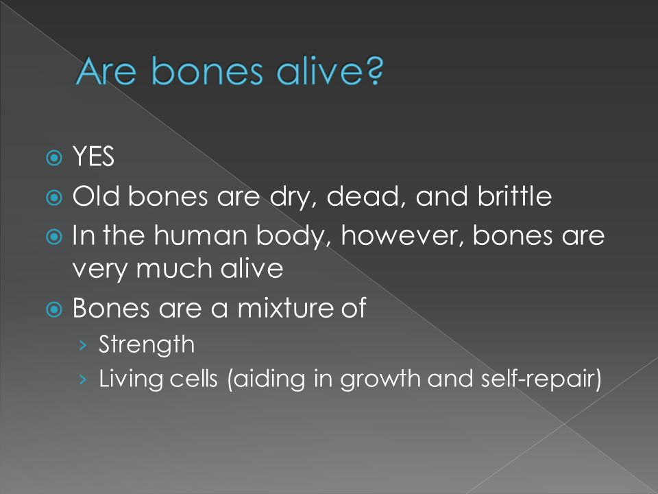 Are bones alive YES Old bones are dry, dead, and brittle