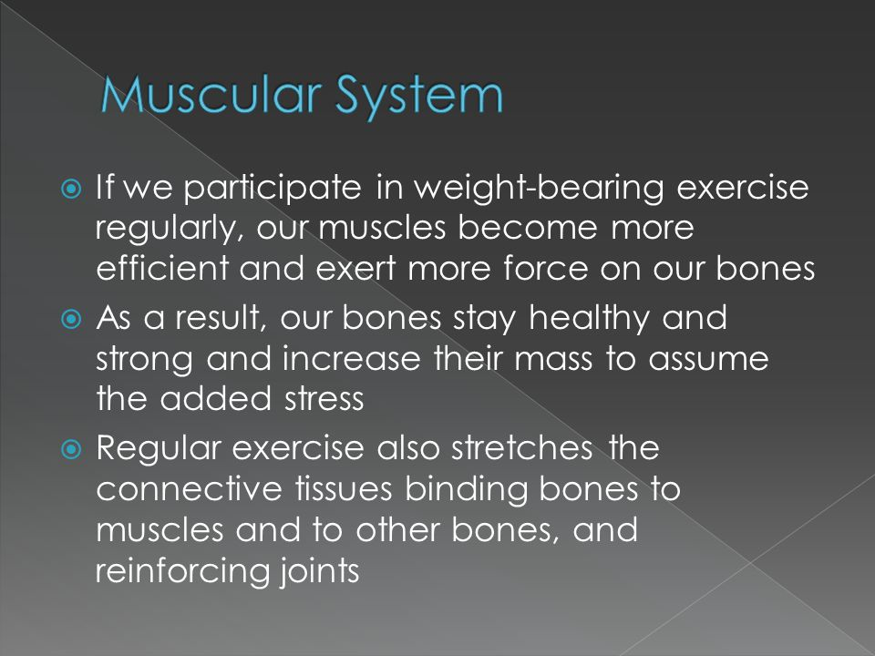 Muscular System If we participate in weight-bearing exercise regularly, our muscles become more efficient and exert more force on our bones.