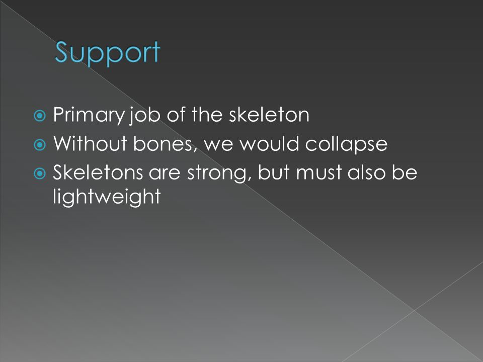Support Primary job of the skeleton Without bones, we would collapse