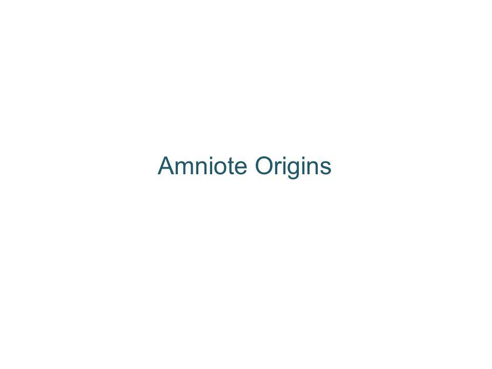 Amniote Origins