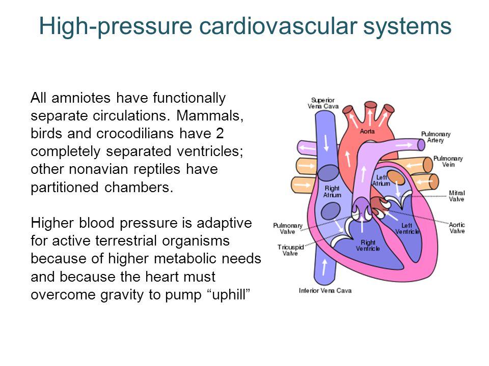 High-pressure cardiovascular systems