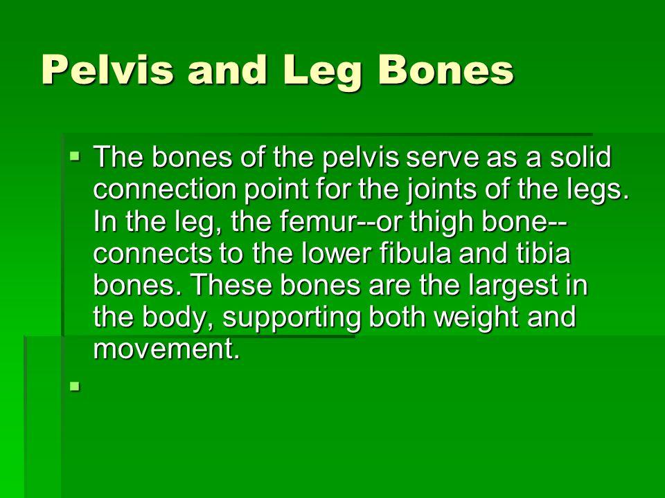 Pelvis and Leg Bones