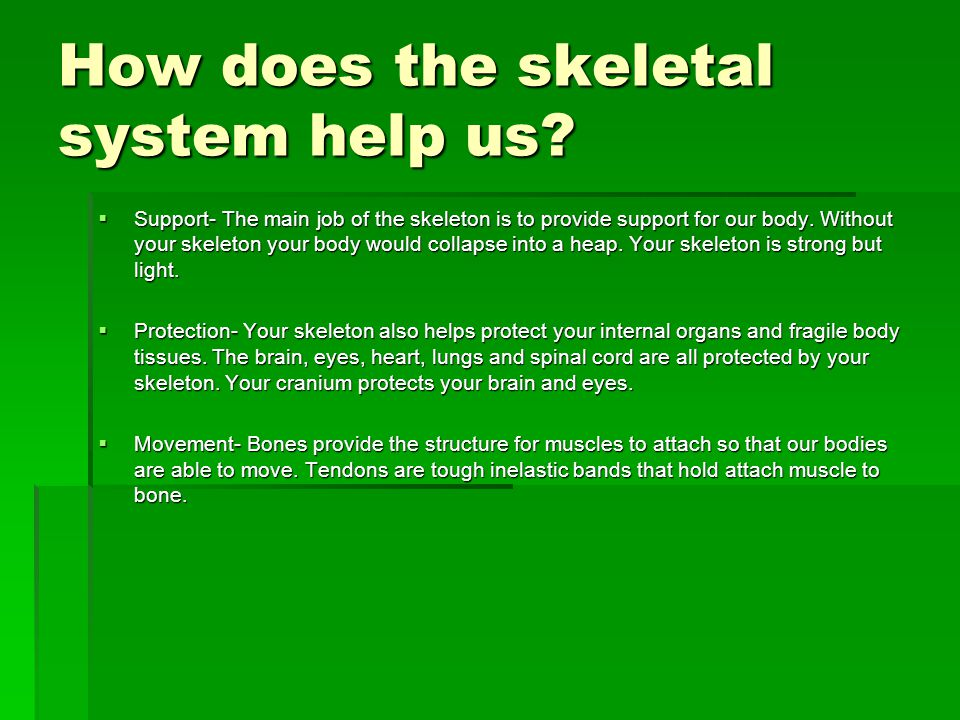 How does the skeletal system help us