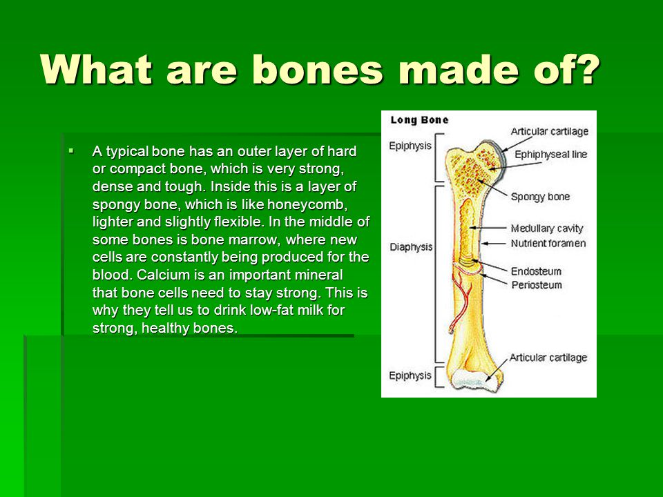 What are bones made of