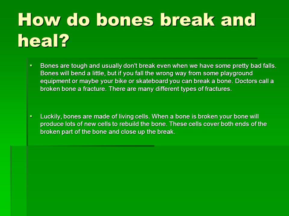 How do bones break and heal