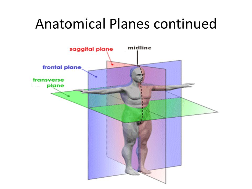 Anatomical Planes continued