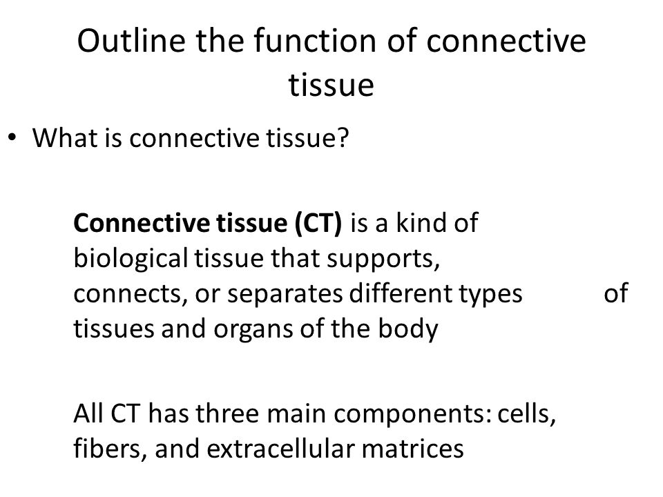 Outline the function of connective tissue