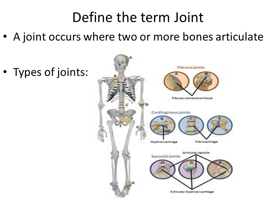 Define the term Joint A joint occurs where two or more bones articulate Types of joints: