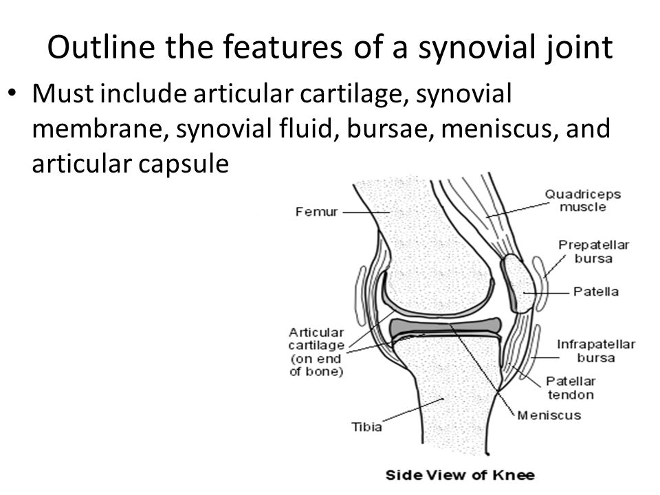 Outline the features of a synovial joint