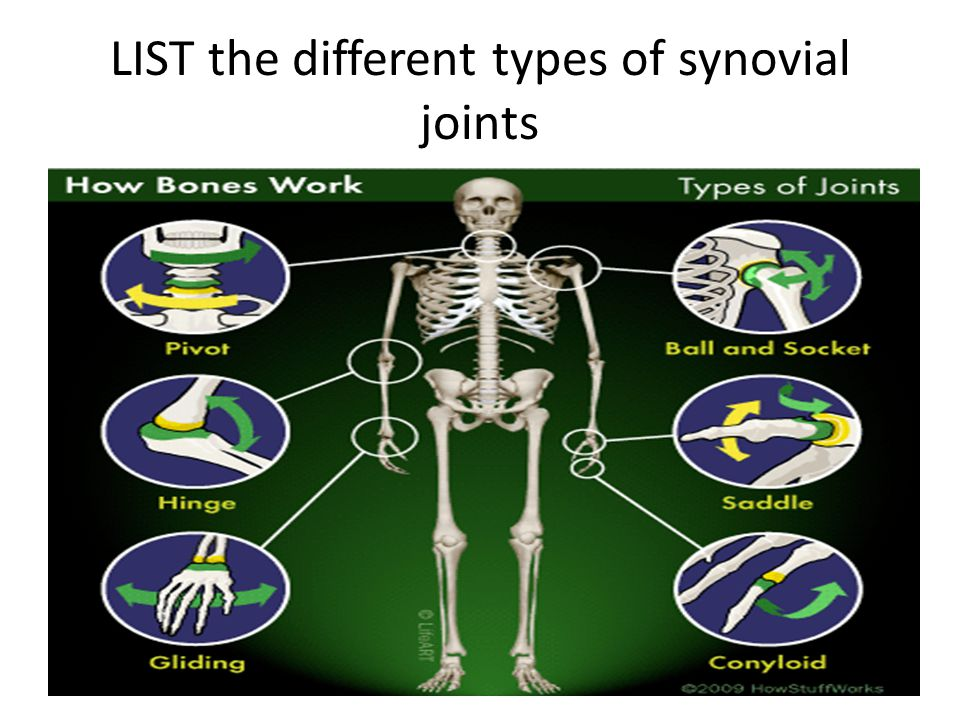LIST the different types of synovial joints