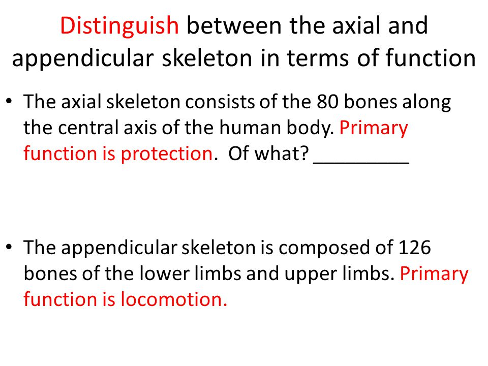 Distinguish between the axial and appendicular skeleton in terms of function