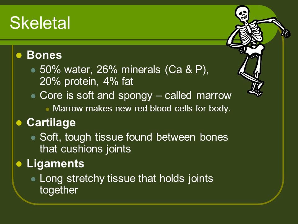 Skeletal Bones Cartilage Ligaments