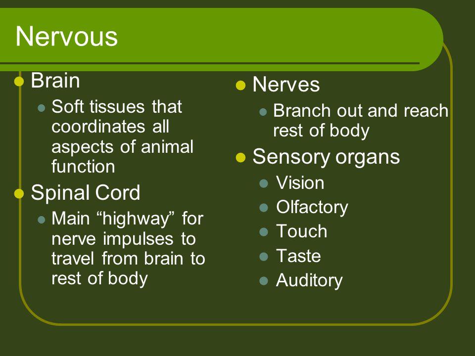 Nervous Brain Nerves Sensory organs Spinal Cord