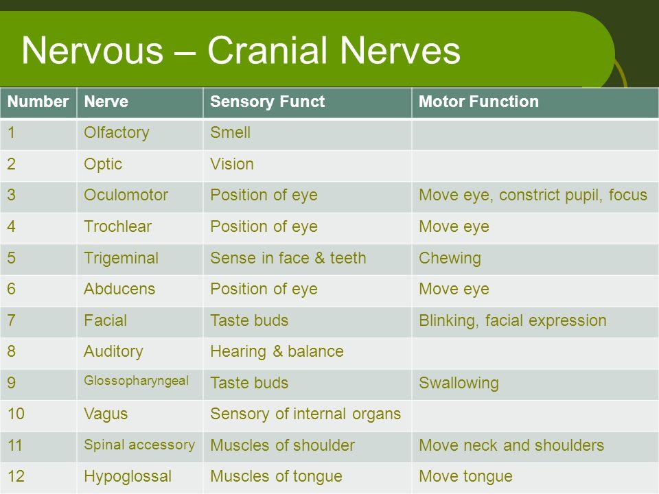 Nervous – Cranial Nerves