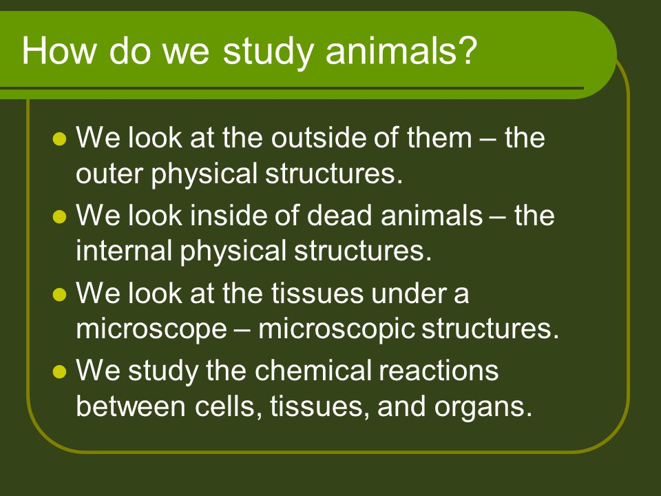 How do we study animals We look at the outside of them – the outer physical structures.