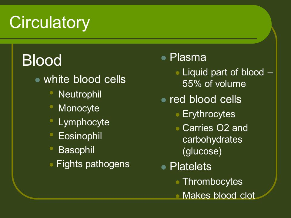 Circulatory Blood Plasma white blood cells red blood cells Platelets