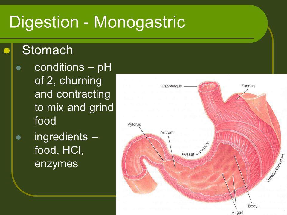 Digestion - Monogastric