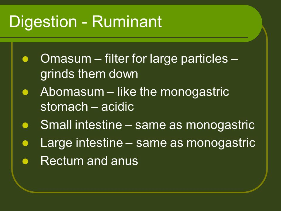 Digestion - Ruminant Omasum – filter for large particles – grinds them down. Abomasum – like the monogastric stomach – acidic.