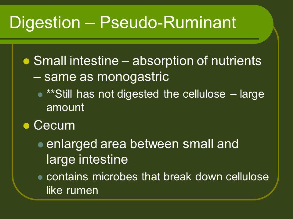 Digestion – Pseudo-Ruminant