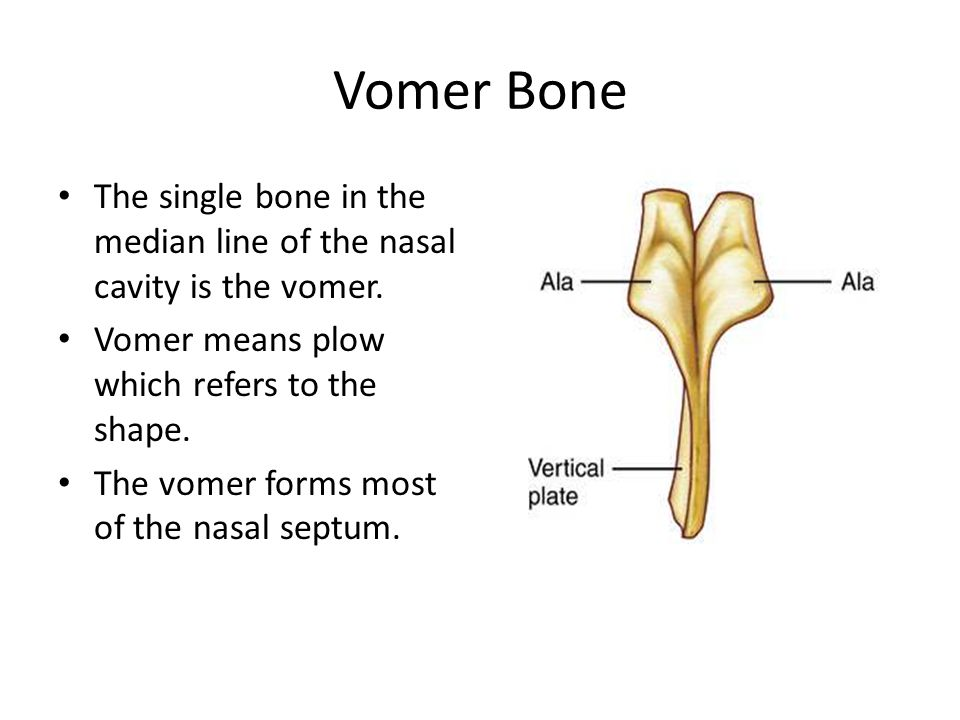 Vomer Bone The single bone in the median line of the nasal cavity is the vomer. Vomer means plow which refers to the shape.