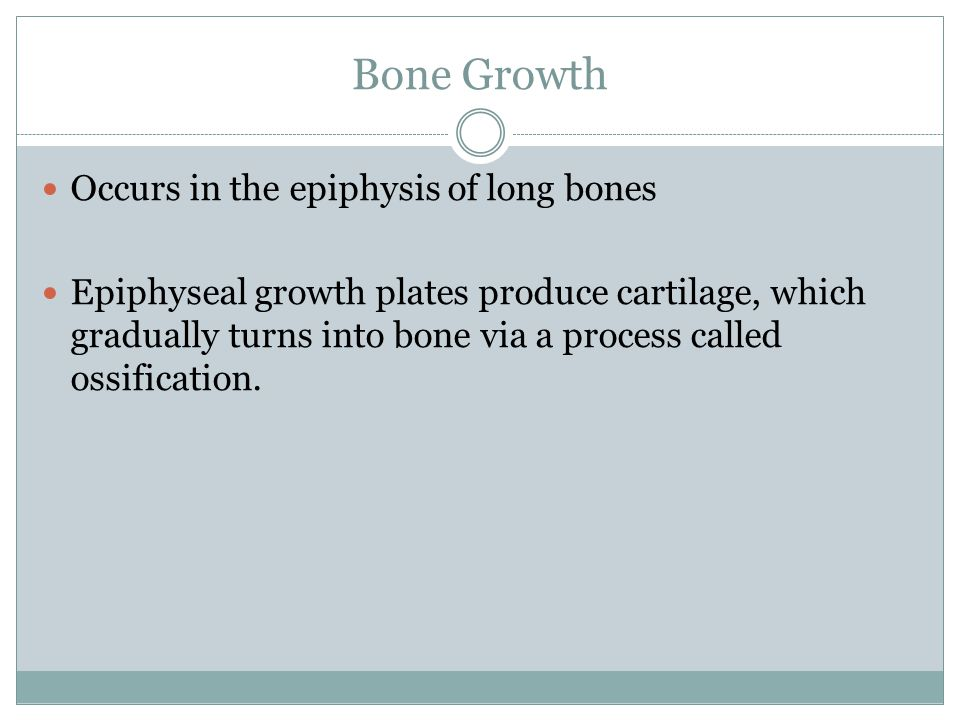 Bone Growth Occurs in the epiphysis of long bones