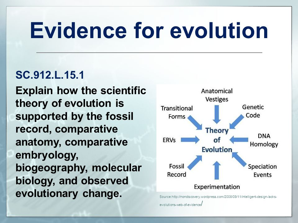 evidence of the theory of evolution essay Essay v: evolution for christians these phenomena reinforce the evidence for evolution gathered from evolution as fact and theory, in hen's teeth.