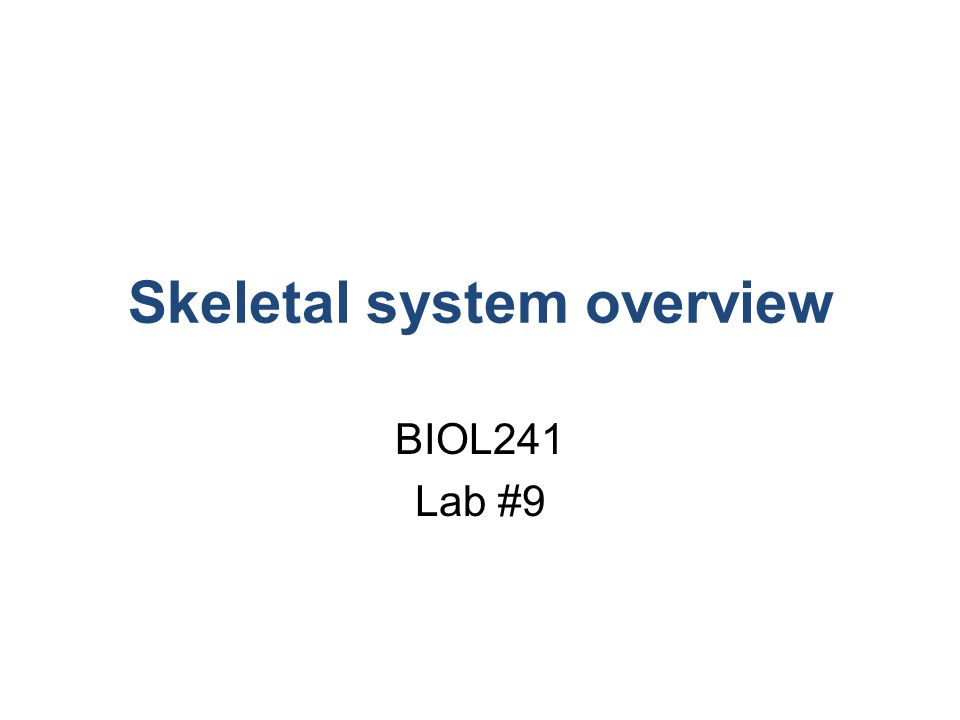 Skeletal system overview