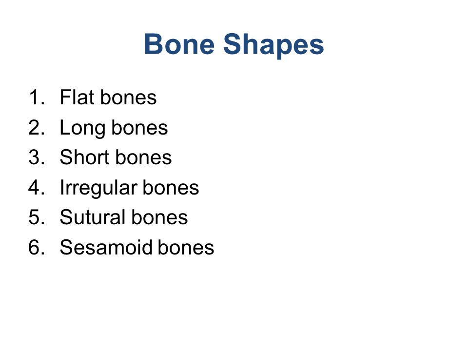 Bone Shapes Flat bones Long bones Short bones Irregular bones
