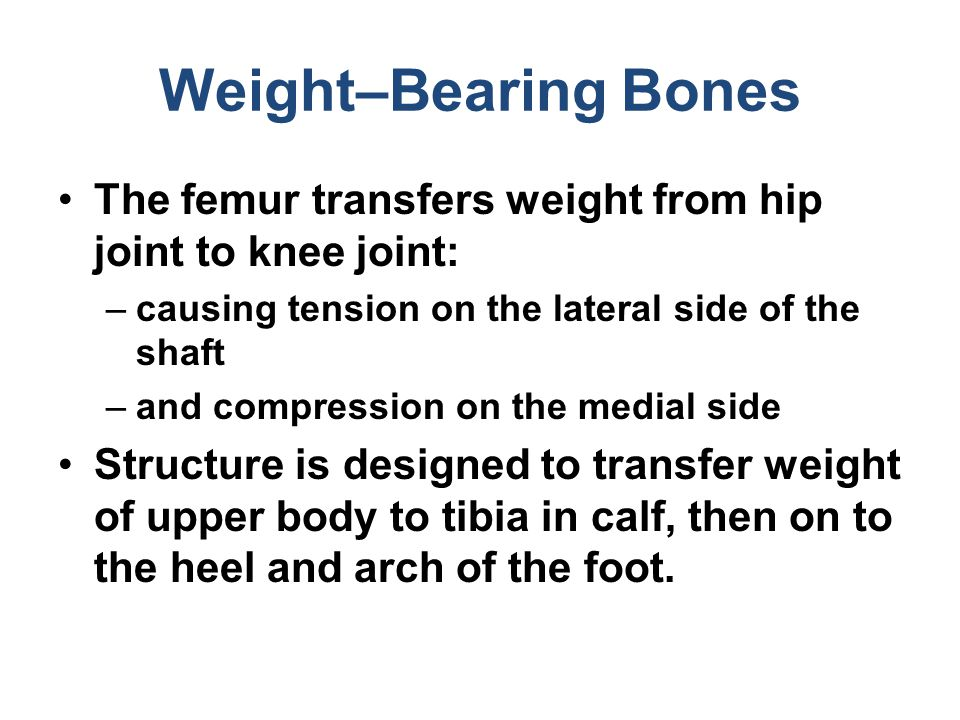 Weight–Bearing Bones The femur transfers weight from hip joint to knee joint: causing tension on the lateral side of the shaft.