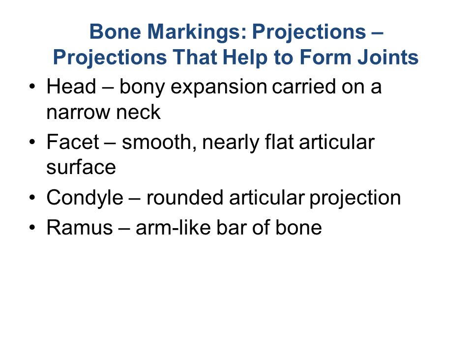 Bone Markings: Projections – Projections That Help to Form Joints
