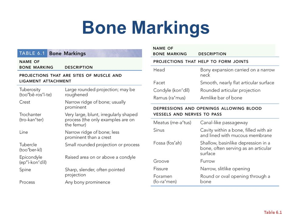 Bone Markings Table 6.1