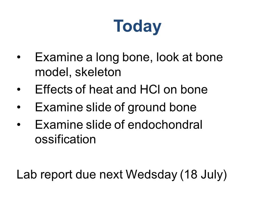 Today Examine a long bone, look at bone model, skeleton