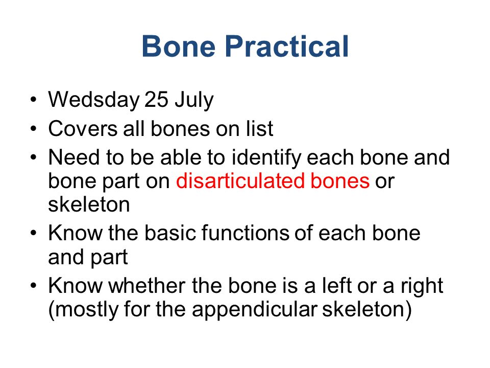 Bone Practical Wedsday 25 July Covers all bones on list
